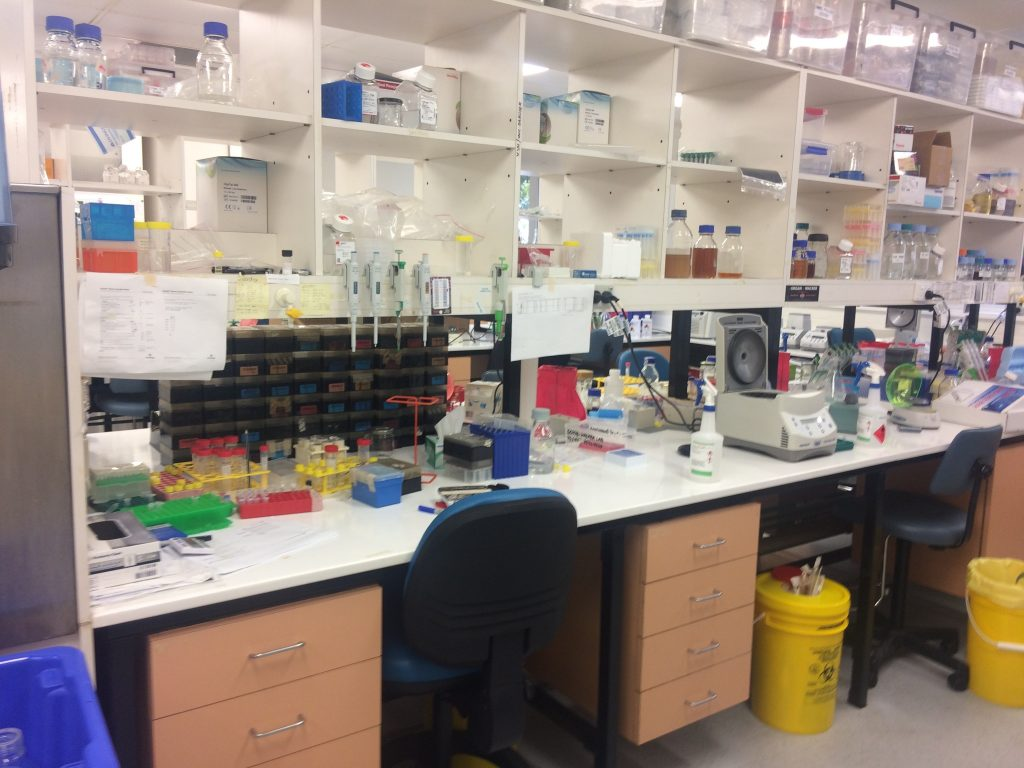 Research lab at the University of Queensland, where scientists worked on scarlet fever discovery.